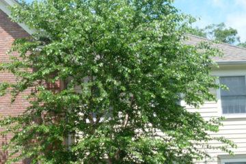 tree-1024x685